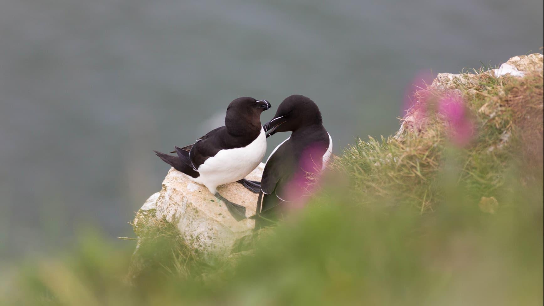 Yorkshire Wildlife Trust Image